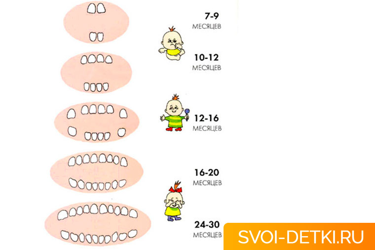 Сроки прорезывания зубов у малыша